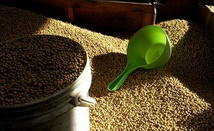 China increases soybean import from Russia